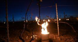 Les bougies, pour réchauffer les vignes de Chablis