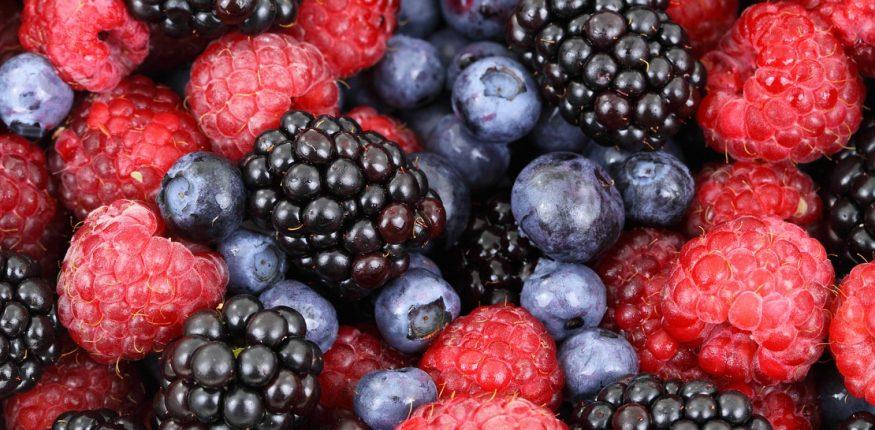 Planter de petits fruits dans le jardin